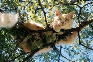 cat in a tree how to get a cat from a tree corner