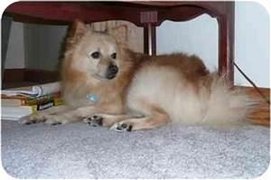 Romeo (aka Harry) | Adopted Dog | Lovettsville, VA ...