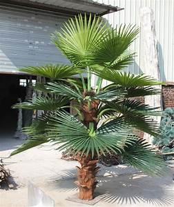 Palmier Artificiel Gifi : d coration d 39 int rieur 100mg souchesde palmier artificiel 0490 sj065 arbres artificiels id ~ Teatrodelosmanantiales.com Idées de Décoration