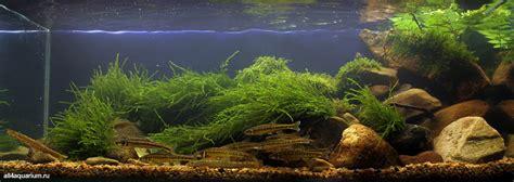 la nature et incarnation dans l aquarium realites et fausses idees