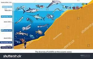 Layers Ocean Deep Sea Creatures Stock Vector 225321616
