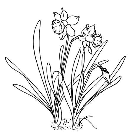 Kleurplaat Narcis by Leuk Voor Narcissen