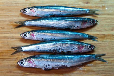 pesci cucina ristoranti a natale tre cuochi su quattro cucineranno il