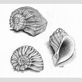 Drawn shell ske...