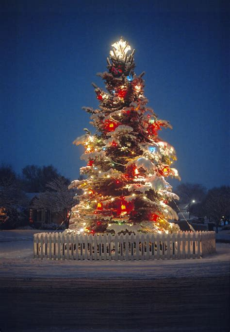 28 Best  Large Outdoor Christmas Tree  2015 New Design