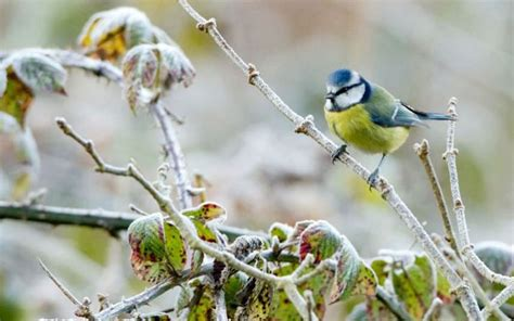 Do You Winter Gardening Blues by Garden Birds Four Things To Do This Winter To Help Them