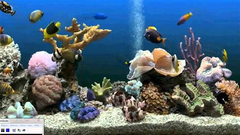 aquarium   desktop background xp