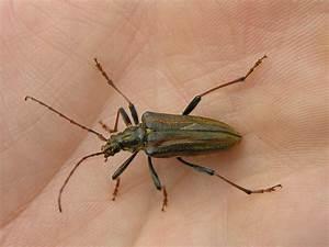 Insecte Qui Mange Le Bois : attaque de xylophages sur votre charpente adoptez les ~ Farleysfitness.com Idées de Décoration