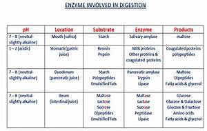 The Biologs  Ezymes