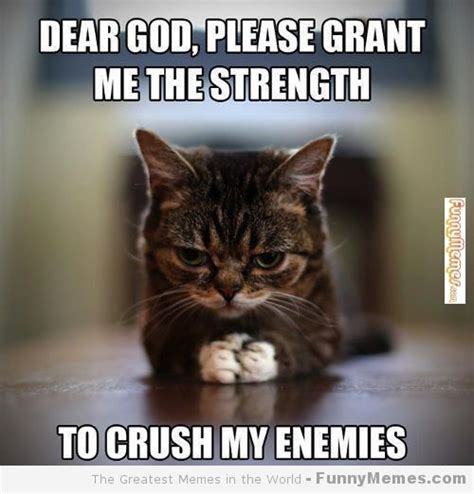 Meme Cat - funny cat memes cat memes please grant me the strength funnymemes com funny