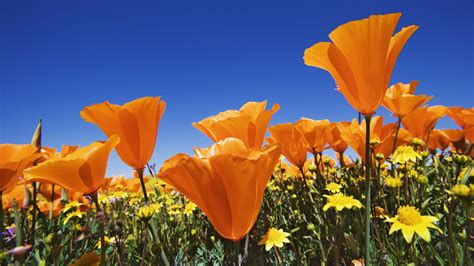 Free Nice Flower Boomwallpapers Rcom Hd Download Pc