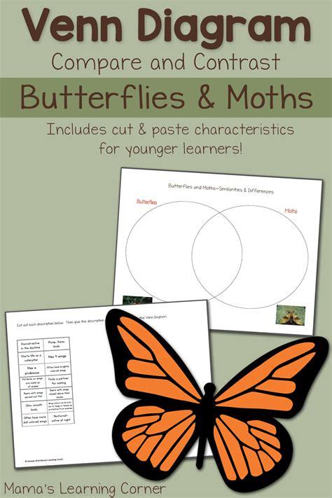 moths  butterflies venn diagram worksheet mamas