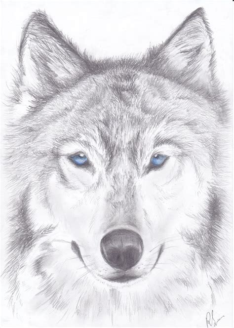 wolf drawings google search wolf art wolf painting