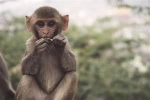Best 500  Monkey Pictures  Hd