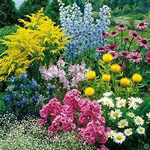 Online Pflanzen Kaufen : hochsommer stauden 36 pflanzen g nstig online kaufen bestellen sie schnell und bequem online ~ Watch28wear.com Haus und Dekorationen