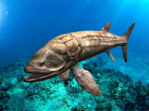 The problem is that, although leedsichthys is known from dozens of fossil remains from around the world and weights of over 50 tons. Leedsichthys Fish Free 3d Model - .Ma, Mb - Open3dModel ...