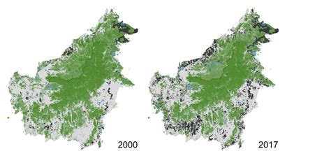 deforestation  borneo slowing  cifor forests news