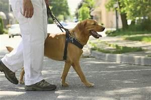 Dog  Guide Dog