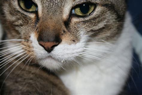 vitamin  affect cats