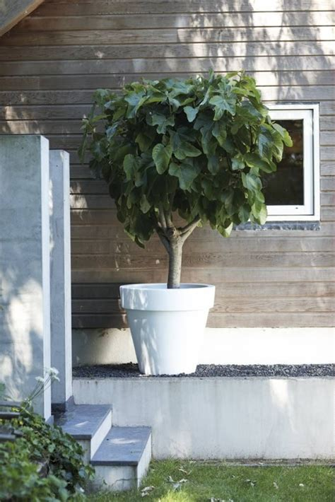 karwei almere buiten grote bloembakken voor buiten nieuwe huis pinterest
