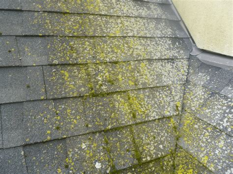 Roof Algae Removal Raleigh Red Roof Inn Stainless Steel Coating Tucson Raising On Ranch House Seattle Airport Seatac Roberts Roofing Ohio State Baton Rouge Sun Seal