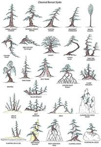 classical bonsai styles trees and rocks