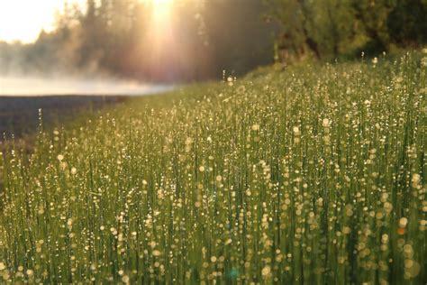 images nature horizon blossom dew light cloud