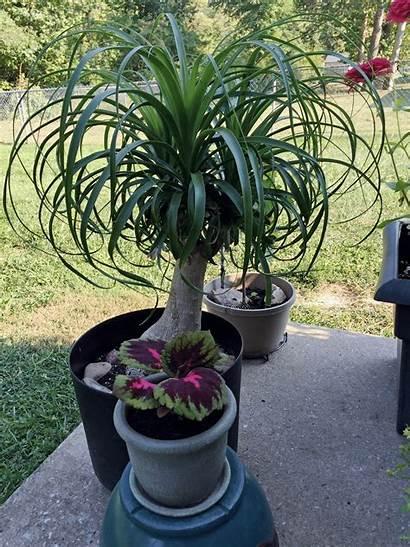 Houseplants Outdoors Outside Plants Indoor Plant Outdoor