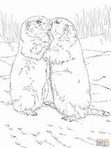 Prairie Dog Coloring Drawing Dogs Printable Getcolorings Kissing Getdrawings sketch template