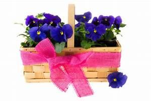 Ab Wann Erdbeeren Pflanzen : ab wann man stiefm tterchen pflanzen sollte ratschl ge ~ Eleganceandgraceweddings.com Haus und Dekorationen