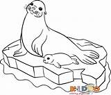 Seal Pages Print Colouring Coloring Sea sketch template
