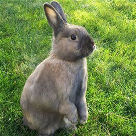 so you want to adopt a rabbit care com