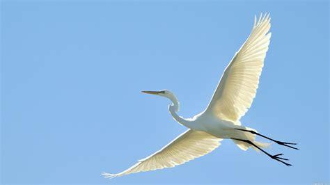 birds in flight for pegasus research matt wyles design