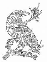 Coloring Zentangle Crow Adults Adult Mycoloring Kolibri Stilisierte Schwarzen Gezeichnet sketch template