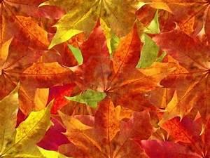 pemandangan: Autumn Leaves Wallpaper