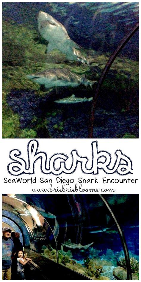 Sharks Seaworld San Diego Shark Encounter Brie Blooms