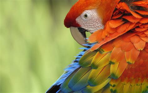 Colorful Parrot Wallpaper  1920x1200 #12296