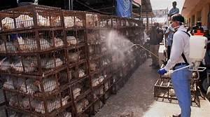 Bird Flu Scare In Delhi  Symptoms  Treatment  Dos And Don