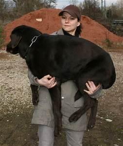 Ich Suche Einen Großen Hund : hundeschule potsdam erste hilfe am hund tragen heben ~ Jslefanu.com Haus und Dekorationen