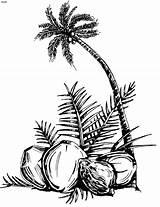 Coconut Tree Pohon Kelapa Vektor Coloring Silhouette Drache Kokosnuss Ausmalbilder Popular Ich Palm Essay Konkani Bin Tanaman Clipart Zum Daun sketch template