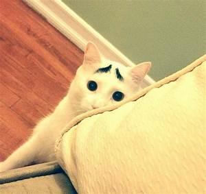 Gekke kattennamen