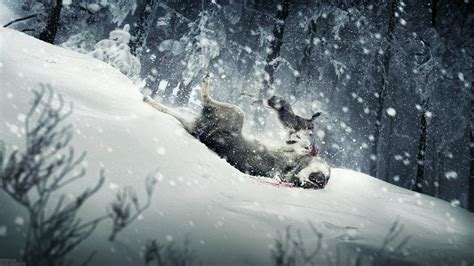 Animals In Snow Wallpaper - animals in snow wallpaper wallpapersafari