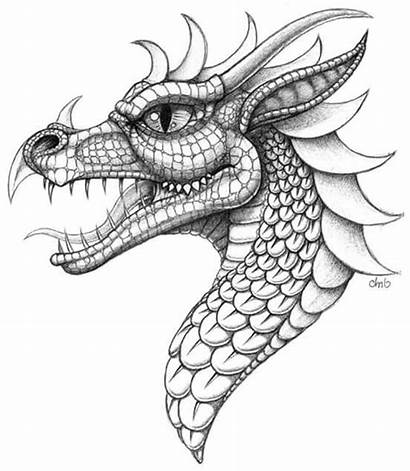 Dragon Coloring Drawing Head Pages Drawings Realistic