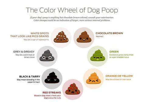 dog poop color meaning  health problem signs puppies club