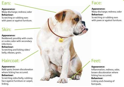 food allergy symptoms  dogs food