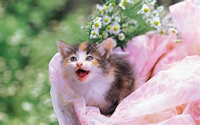 Kittens Kitten Pretty Flower Cuddly Basket Yard