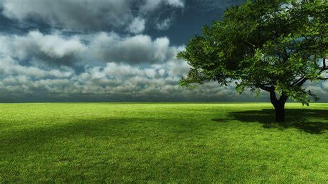Green Tree Hd Wallpaper by Free Tree Wallpaper For Phone Pixelstalk Net