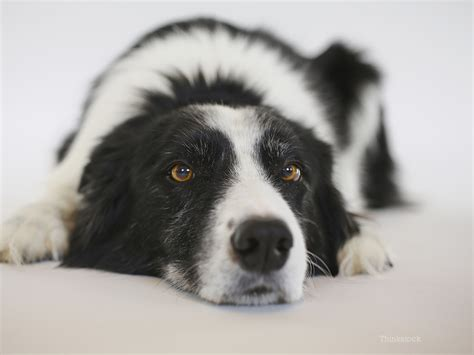 canine urinary tract infection uti  dogs