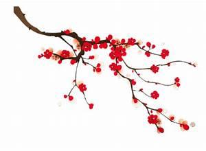 Dessin Fleur De Cerisier Japonais Noir Et Blanc : fleurs de cerisier japonais dessin ~ Melissatoandfro.com Idées de Décoration