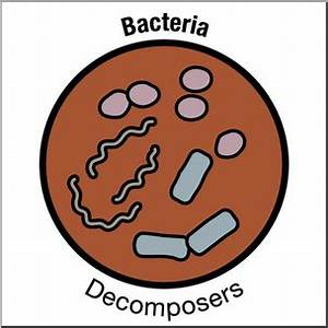 Decomposers Clipart | www.pixshark.com - Images Galleries ...